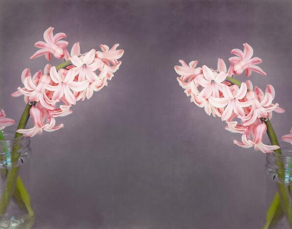 flowers-1369806_640
