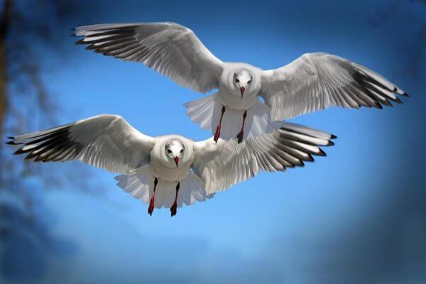 gulls-654046