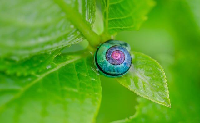 snail-1335473_1280